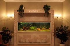 Пресноводный аквариум с дискусами