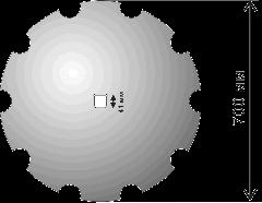 Solokh's disk camomile