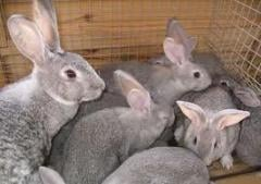 Rabbits. We have the most reasonable prices on