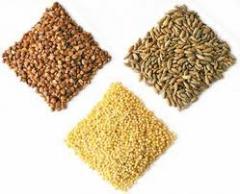 Крупы пшеничные. Крупы пшеничные от производителя. У нас самые дешевые цены по всей Черкасской области крупы пшеничные. Мы реализуем крупы пшеничные оптом и в розницу.