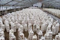 Субстраты для выращивания Вешенки, продажа, Киев,