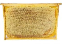 Carpathian Honey (Golden rod) 2015