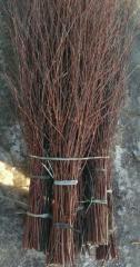 Broom birch 1s