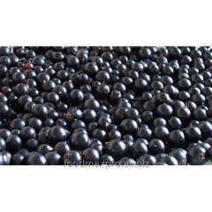 Currant black Vishivanka of kg