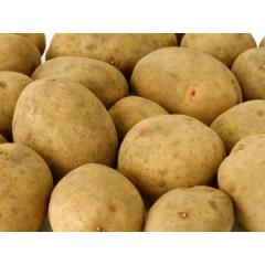 Kg potato in mesh bag