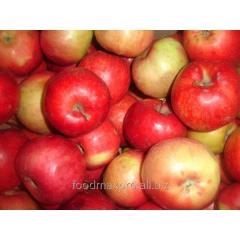 Apple Aydared of kg