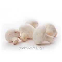 Champignon mushrooms D_nbo Uzhin in 3 minutes 200