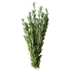 Israel rosemary 50 of
