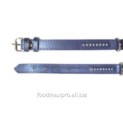 Collar for dogs of Topsi fiolet / pastes