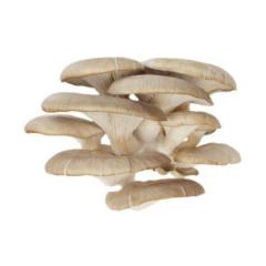 Oyster mushroom mushrooms petals of 400 g