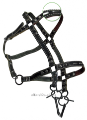 Bridle - a halter the skin decorated a code 944