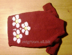 Sweater for a doggie of Bordeaux