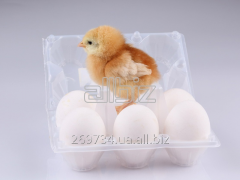"Incubator for eggs ""Chicken of a"