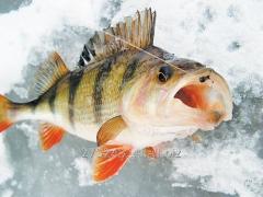 St. m river fish, fresh fish