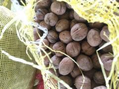 Грецкий орех в скорлупе 20 тонн не калиброваный