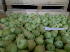 Apple semerenko