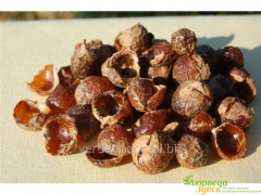 Soap nuts 100 grm. a dried fruit without stone,