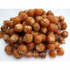 Soap nuts a dried fruit without stone, Rita,