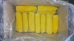 Corn ear frozen