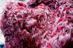 Fur of Kalgan (Kalgan in plates)