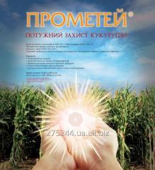 Прометей гербицид на кукурузу