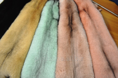 Fur of polar fox