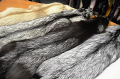 Fur of the silver fox
