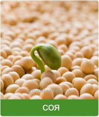 Семена сои сорт Кордоба 1 р.