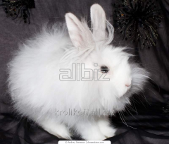 Rabbits at the favorable price