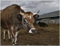 Корма для животных. Корма для животный.  Корма для животных оптом. Производство кормов для животных. Продажа кормов для животных.