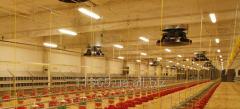 Лампы энергосберегающие для птицефабрик, освещение