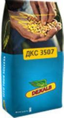 Corn hybrid DKS 3717