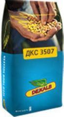 Corn hybrid DKS 4964