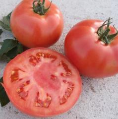 Vp 2 f1/vp 2 f1 - a pink indeterminantny tomato,