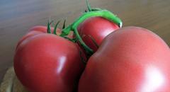 Pink drim f1/pink dream f1 — a tomato