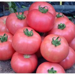 Dimeroza f1/dimerosa f1 — a tomato
