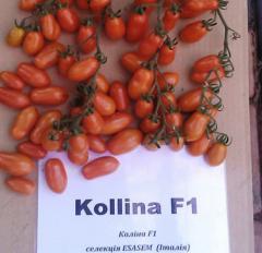 Collina f1/collina f1 — a tomato indeterminantny,