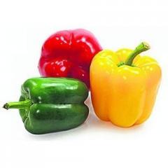 Priscilla f1/pristsila f1 — pepper sweet,