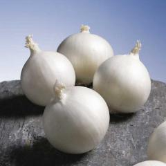 Gladstone / gladstone - onion white, bejo of 10