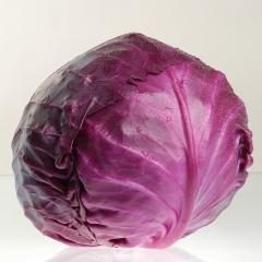 Rocca f1/rokki f1 — a red cabbage, sakata of 1000