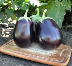Cheryl f1/cheryl f1 - an eggplant, rijk zwaan of 1