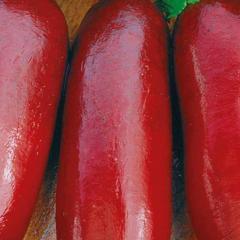 Cylinder / cilindra — beet, euroseed of 5000 grams