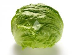 Kuala / kuala - cabbage lettuce, nunhems of 5000