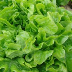 Dubachek / dubachek — salad, moravoseed of 10000