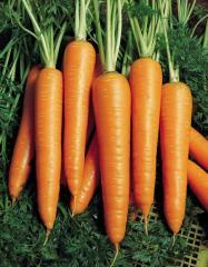 ВИТА ЛОНГА / VITA LONGA - морковь, Bejo  50 грамм