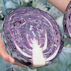 F1/kvit f1 — a red cabbage, moravoseed of 2 500