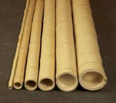 Бамбук стволовой