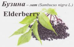 Frozen elderberry