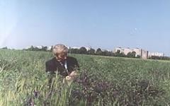 Vick Gibridnaya's seeds 85 - superelitny, the