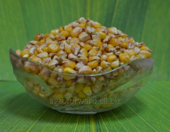 Ziarna kukurydzy